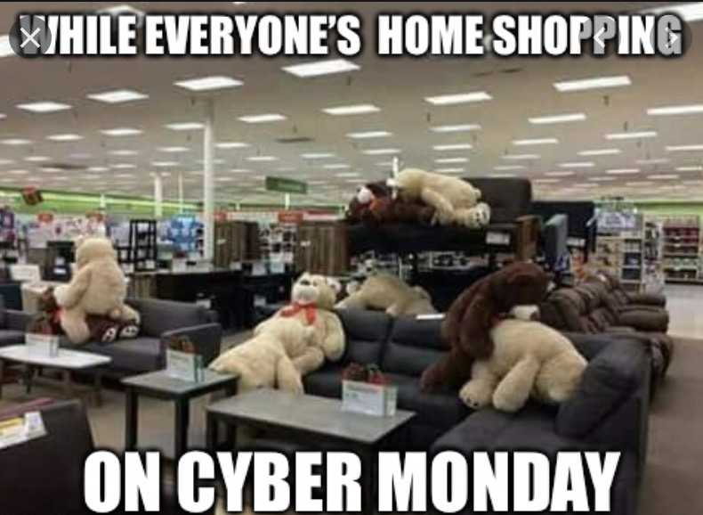 cyber monday animal meme - doing it like they do on the discovery channel