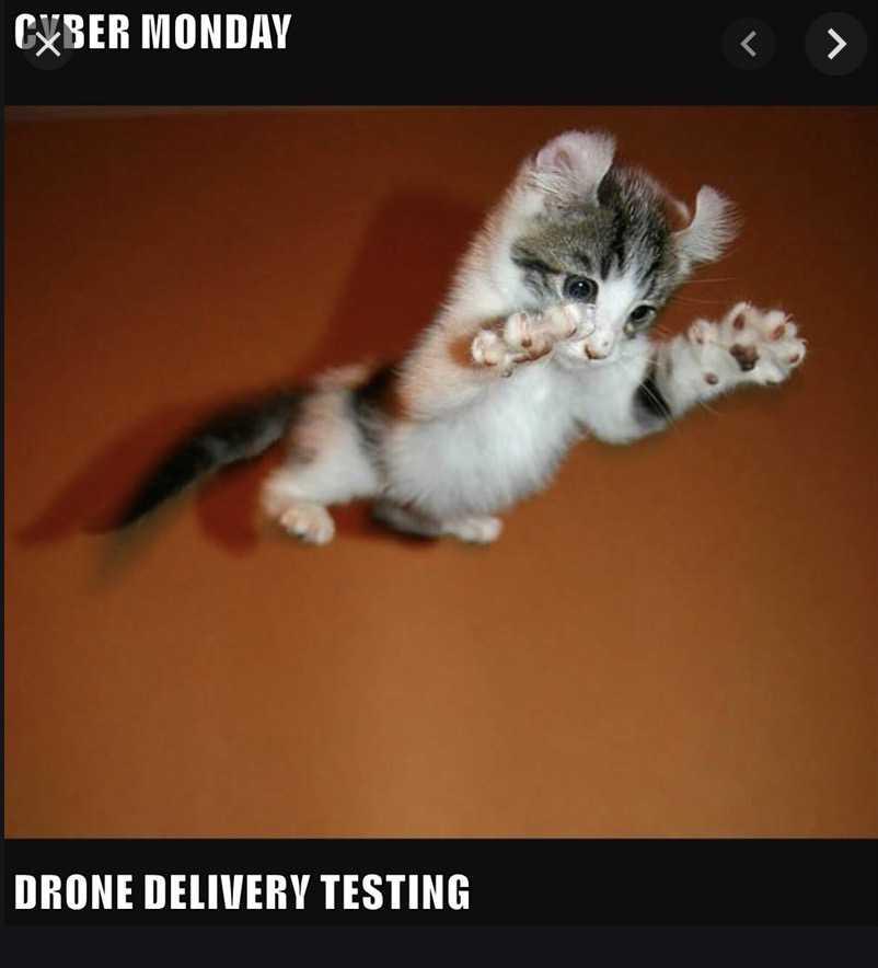 cyber monday animal meme - drone testing