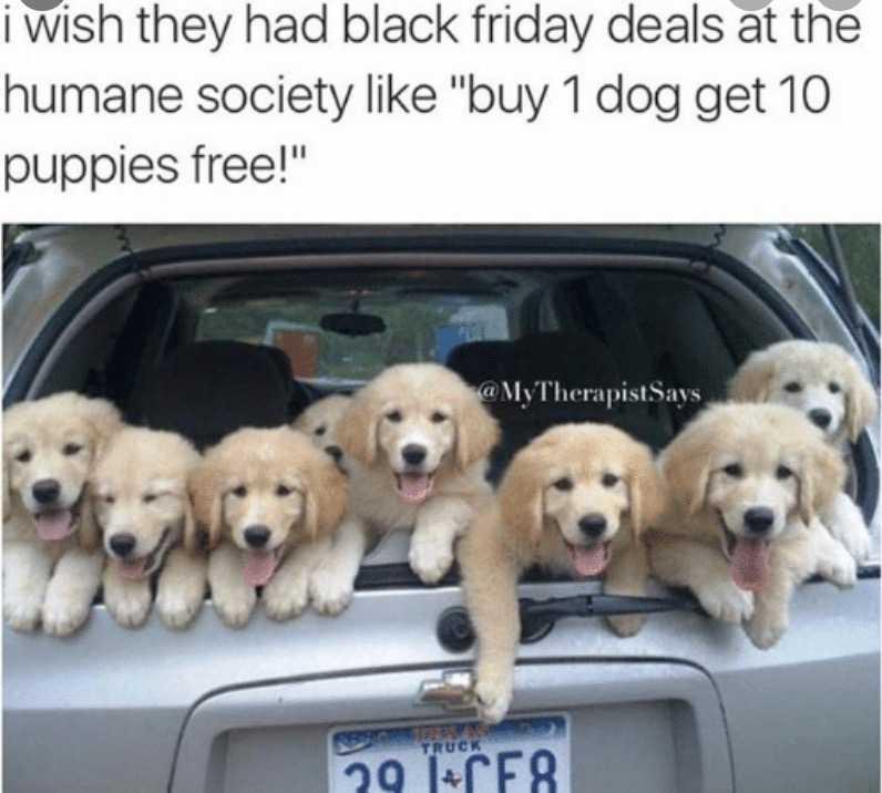 cyber monday animal meme - buy 1 get 6 free