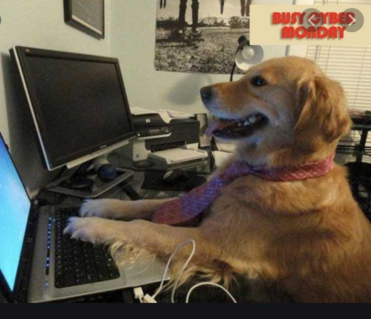 cyber monday animal meme - buy treats