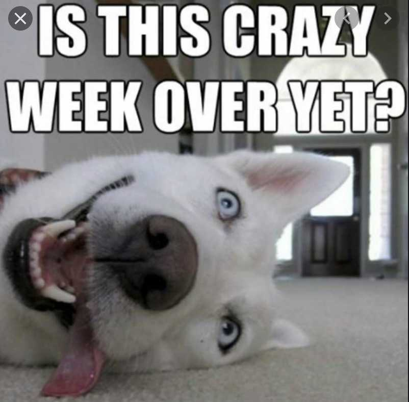 cyber monday animal meme - crazy weekend over