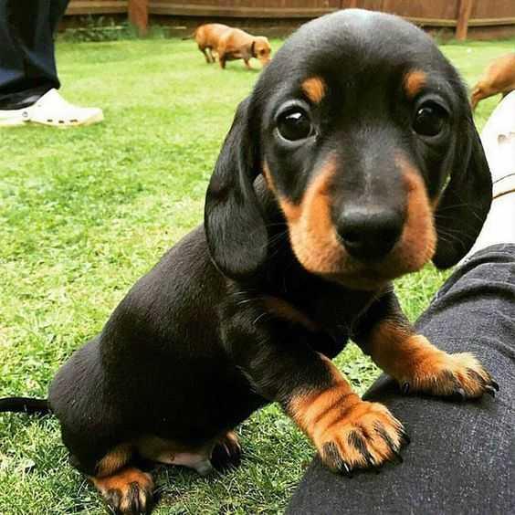 cutest puppy pictures - puppy