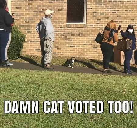 Funny Election Memes - cat voted