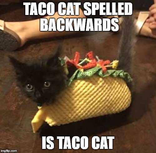 taco memes hilarious - tacocat