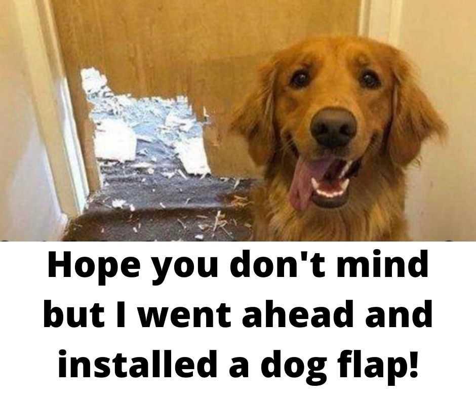 funny animal meme pics - handy dog