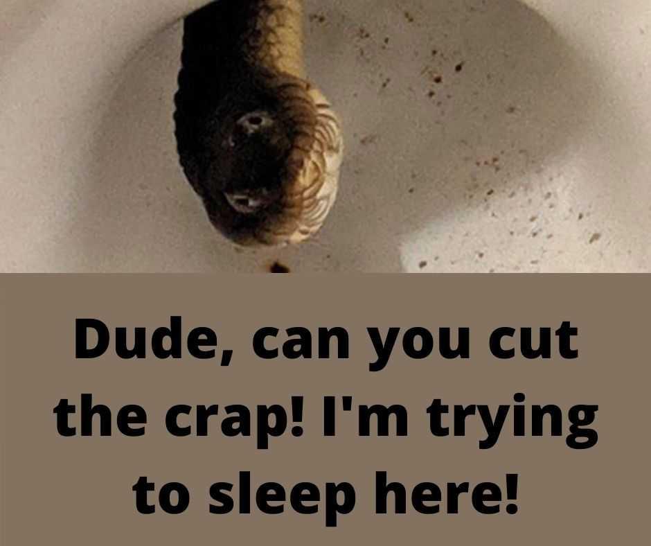 funny animal meme pics - snakes in the bowl