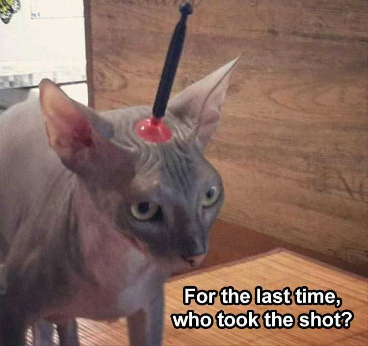 Funny Animal Captions - Cat And Suction Dart