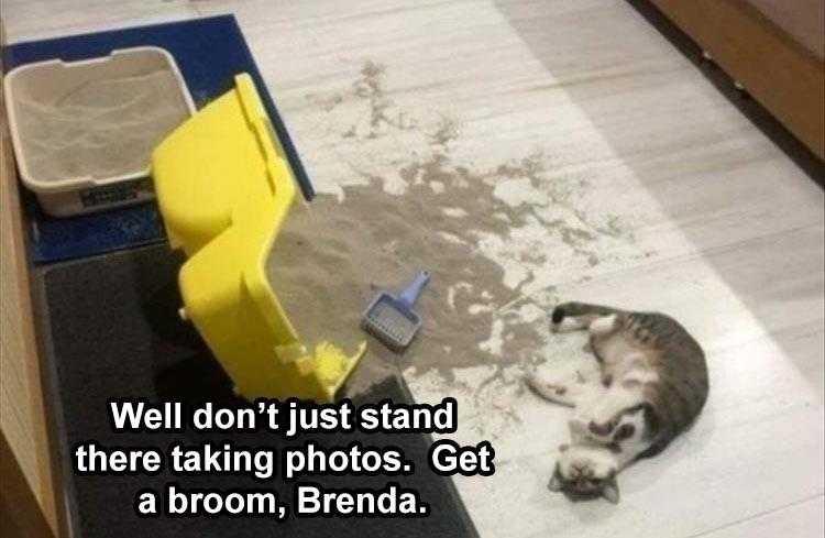 Funny Animal Caption - Kitty Littered