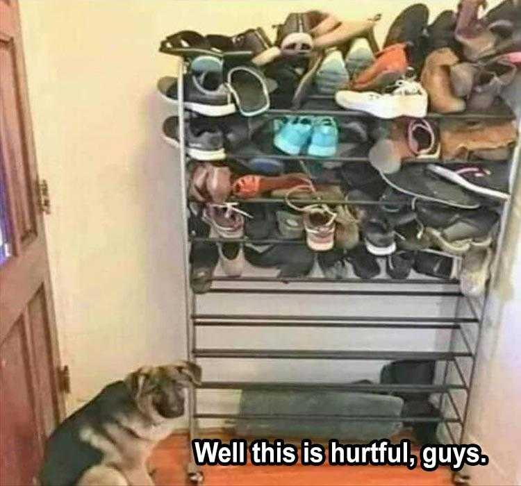 Funny Animal Captions - Shoo In