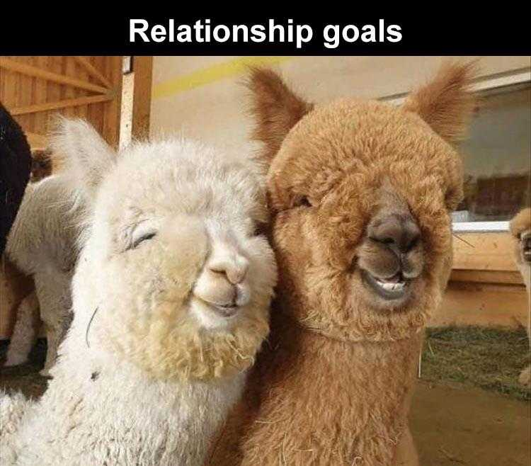Funny Animal Caption - Happiness Is