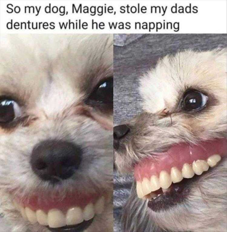 Cute Animal Captions - Dog And Dentures