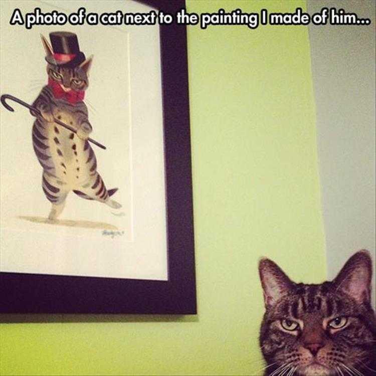 Cute Animal Caption - Cat Not Amused