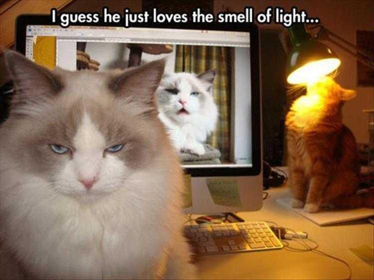 Cute Animal Captions - Light Smells So Beautiful