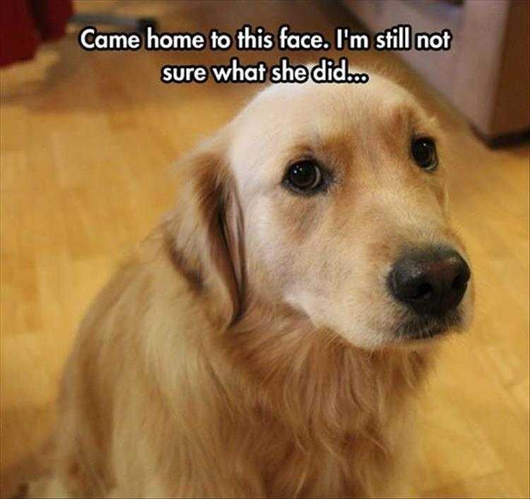 Hilarious Animal Captions - Guilty