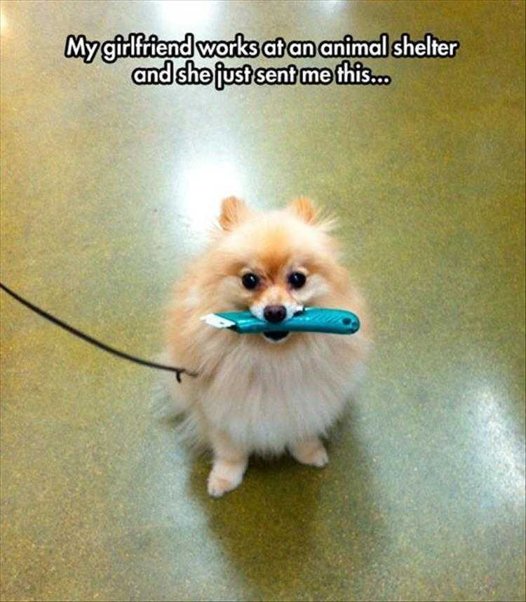 Hilarious Animal Captions - Macgyver Of Dogs