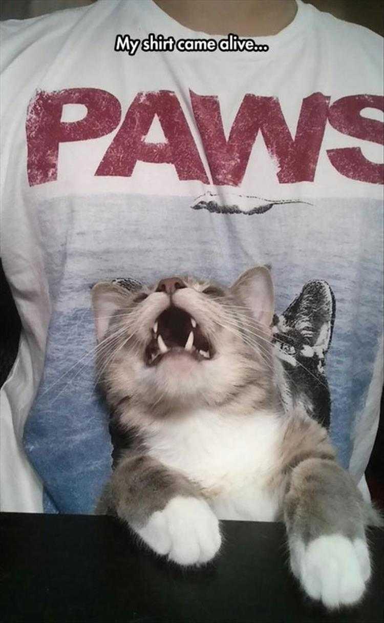 Hilarious Animal Captions - Paws.