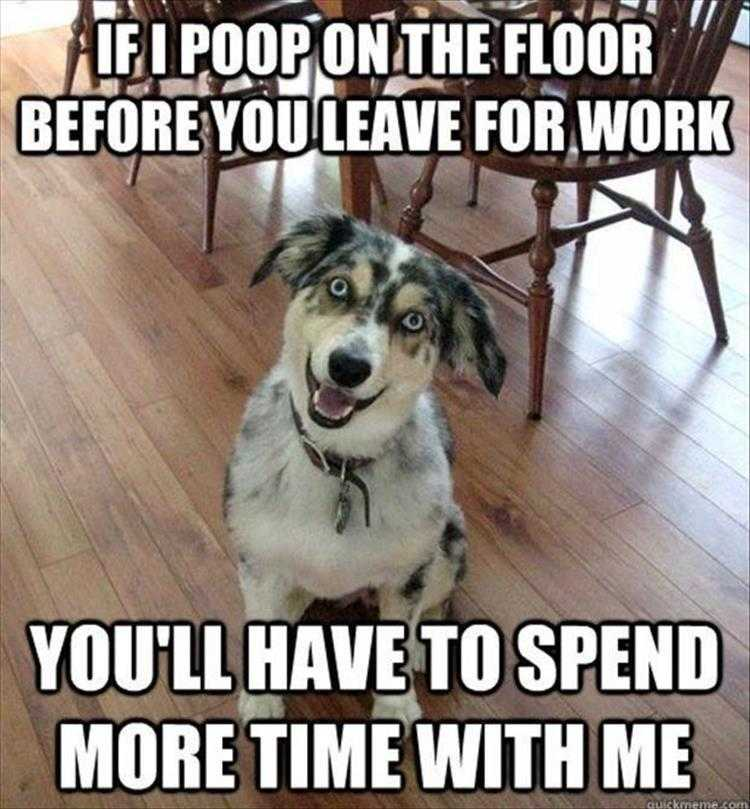 Hilarious Animal Caption - Quality Time