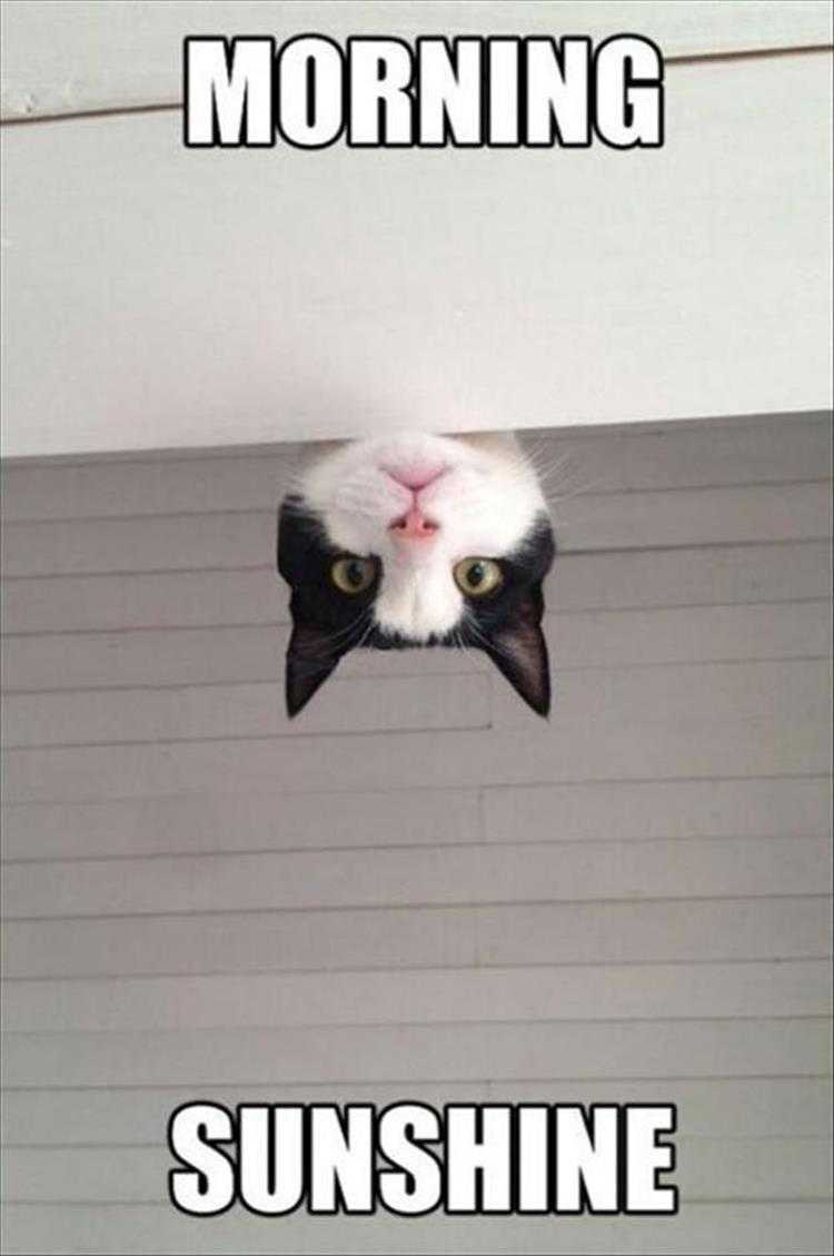Hilarious Animal Captions - Feed Me