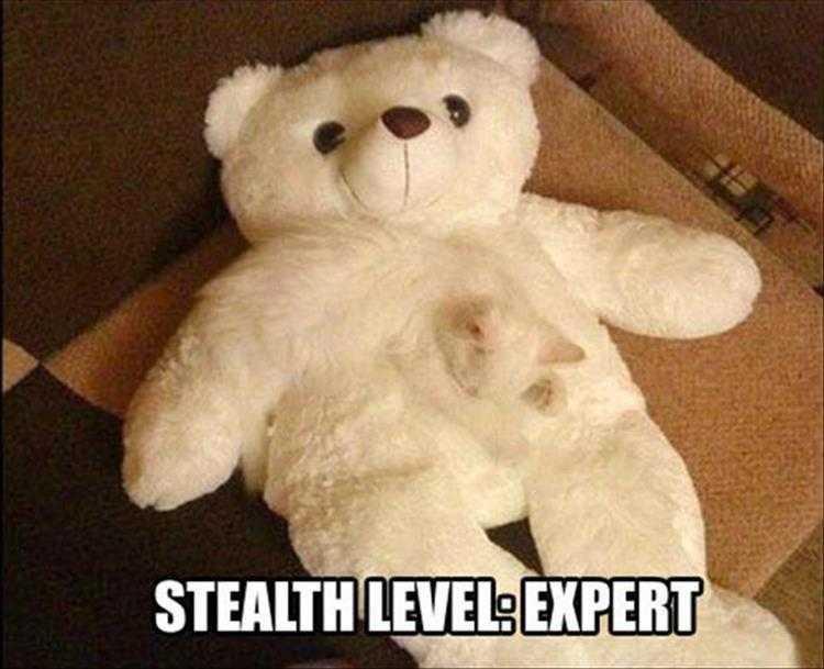 Hilarious Animal Captions - Cloaking On