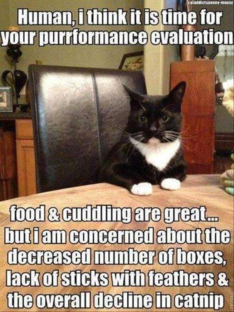 Hilarious Animal Captions - Where's My Catnip