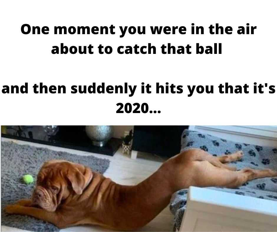 animal meme 2020 - catch fail
