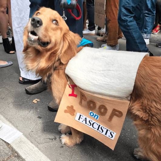 funny protest signs - i poop on facists
