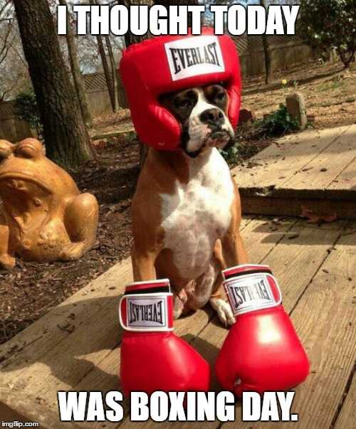 Boxing Day Memes - boxer day
