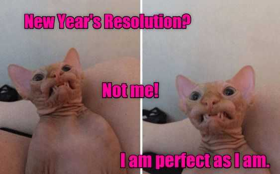 Funny New Years Resolution Memes - purrfect cats don't need resolutions