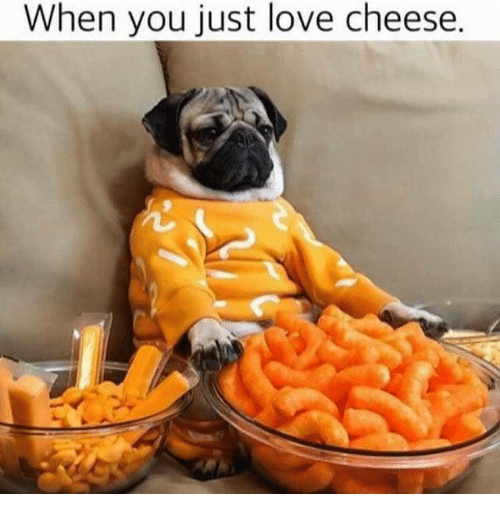 Funny Cheese Memes - When You Love Cheese
