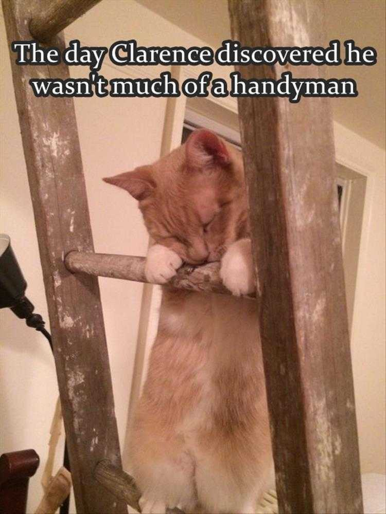 Funny Pet Meme Pictures - Not Handy