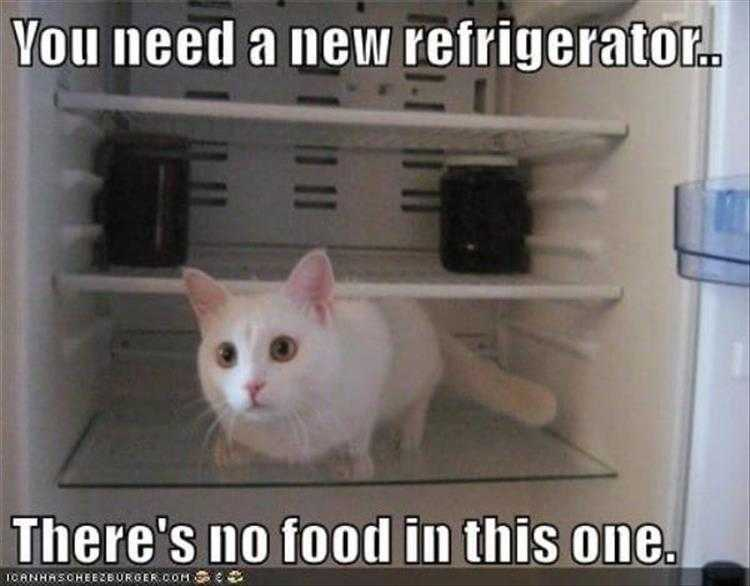 Funny Pet Meme Pictures - Fridge