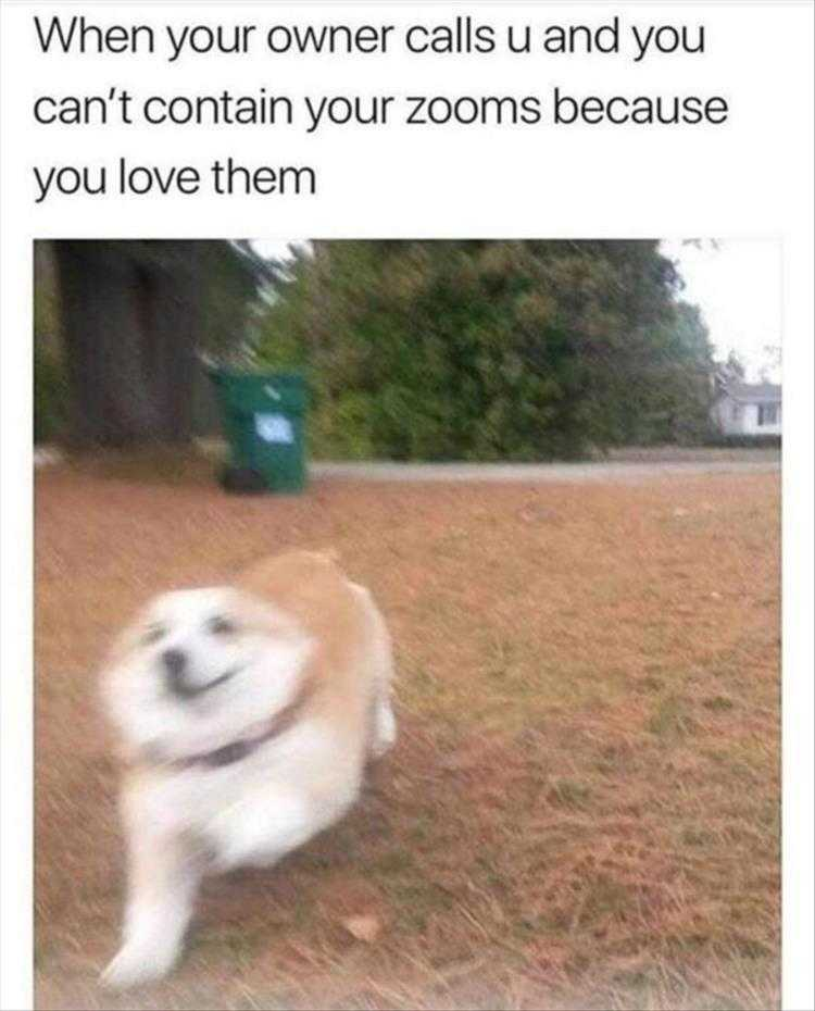 Funny Pet Meme Pictures - Zoom Zoom