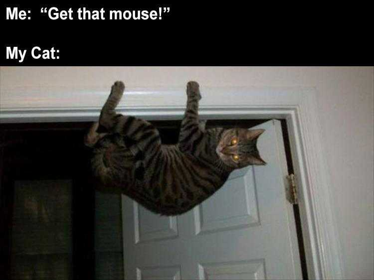 Funny Cat Meme Pictures - Mouse