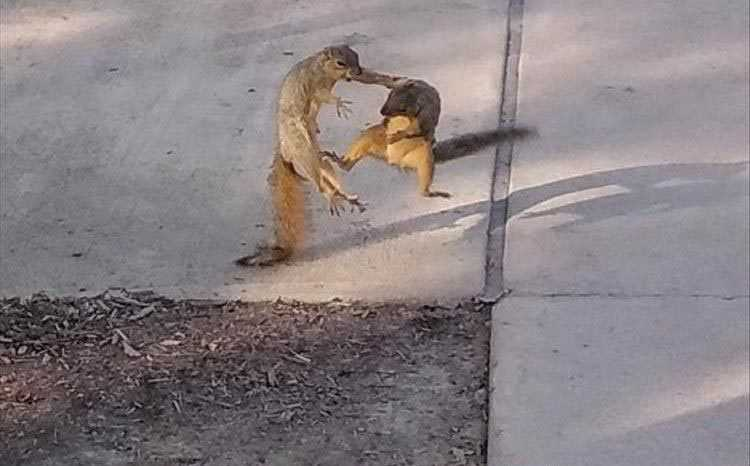 animal pictures funny enough to floor you - kung fu squirrels