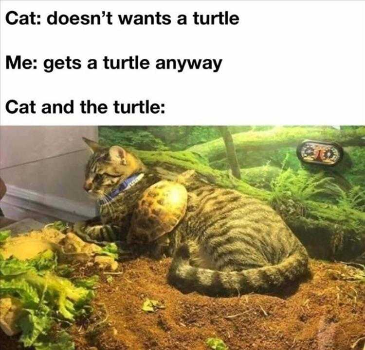 Funny Pictures With Captions - Turtle