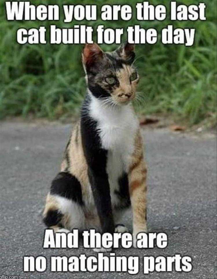 Funny Pictures With Captions - Junkyard Cat