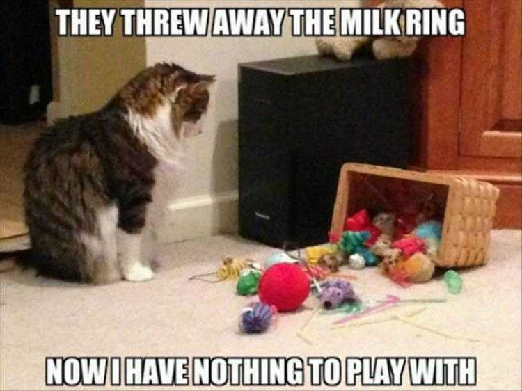 Funny Picture With Captions - Yarn