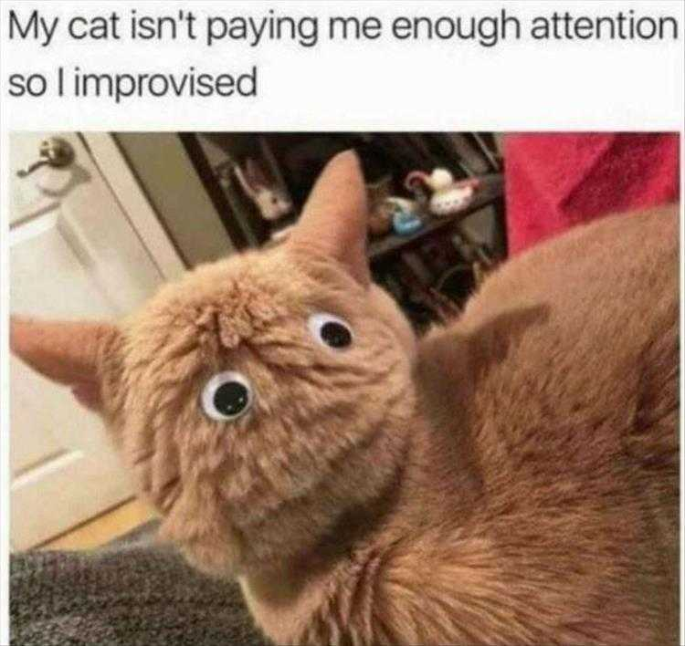 Funny Pictures With Caption - Googly Eyes On Cat