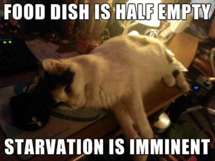 Funny Cat Picture With Caption - Outlook Not Good