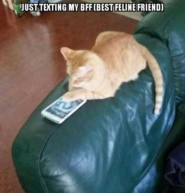 Funny Cat Picture With Caption - Keeping In Touch