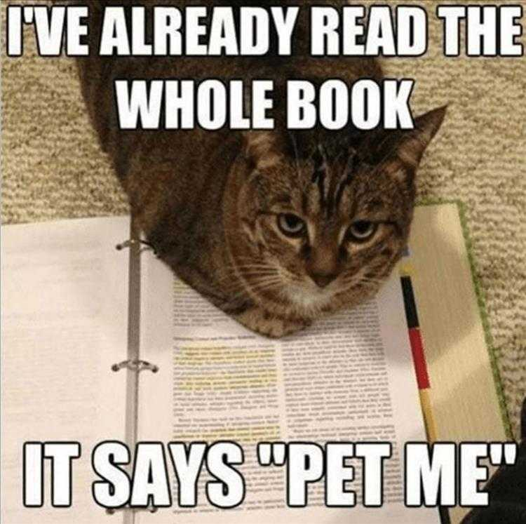 Funny Cat Pictures With Funny Caption - Pet Me