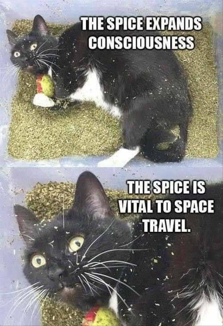 Funny Cat Pictures With Funny Captions - I See The Light