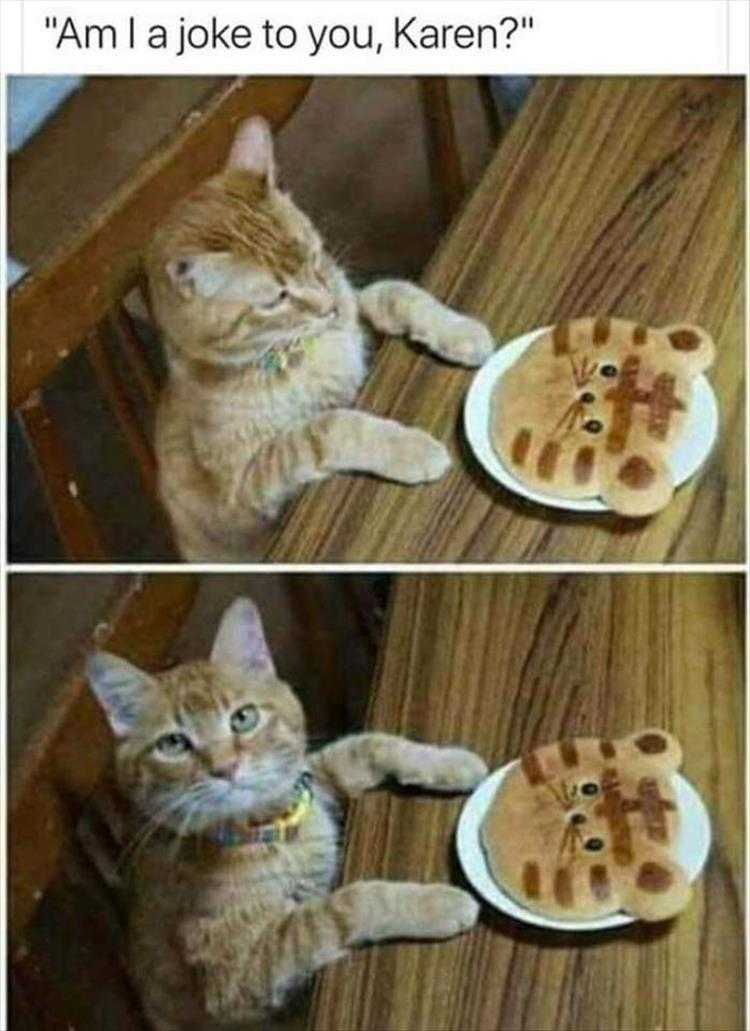 Funny Cat Pictures With Funny Caption - Not Funny
