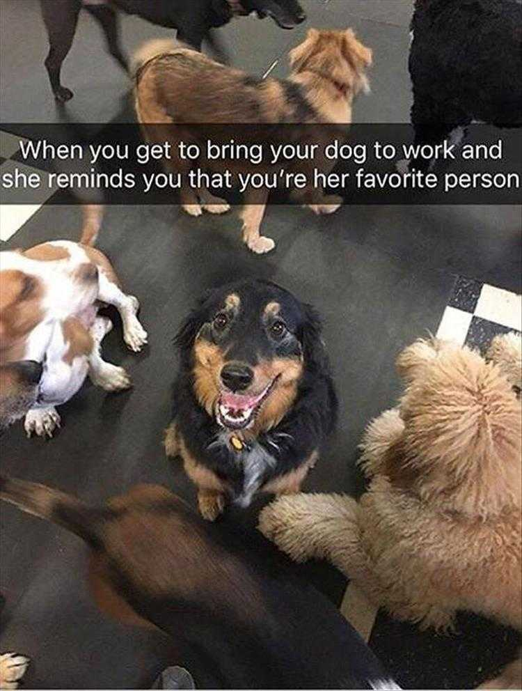 Funny Dog Pictures With Funny Caption - Favorites