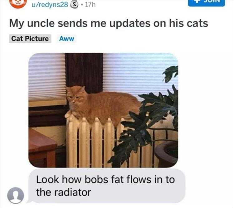 Funny Pictures With Funny Caption - Fat Melting