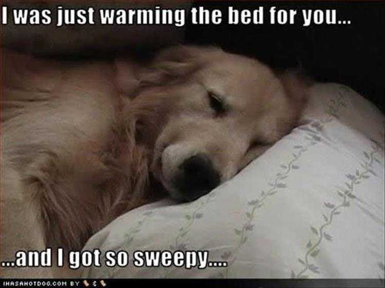 Funny Pictures With Funny Caption - Sweepy