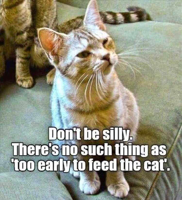 Hilarious Pet Pics - Too Early To Feed Cat