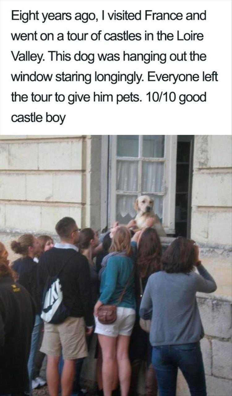 Hilarious Pet Pics - Good Castle Boy