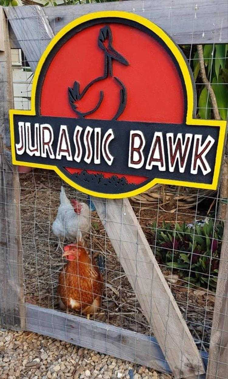 Hilarious Pet Pics - Beware The Bawk