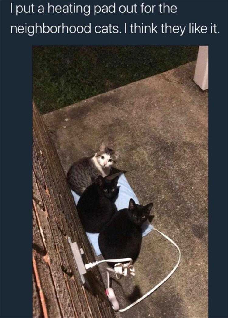 Hilarious Pet Pics - Cats Know Where It's Warmest